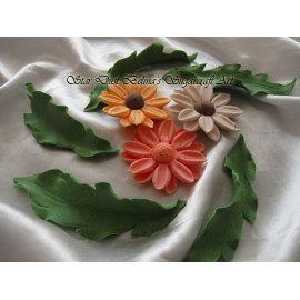Edible Daisy Gerbera mixed colours with leafs